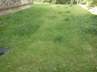 Bee friendly lawn at St Martin's church, Gospel Oak